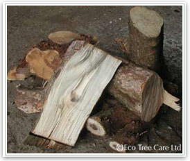 Firewood - Rhododendron