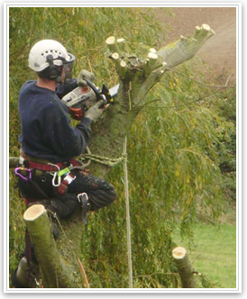 Jobs in Tree Surgery - Arb Careers