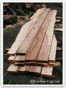 Eco Tree Care & Conservation - Woodland Management, Firewood